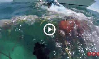 squalo attacca testa sub