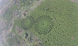 geometrie alberi giappone