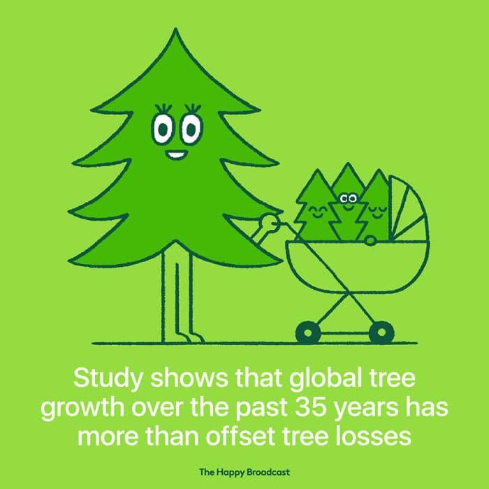 studio mostra che la crescita globale degli alberi negli ultimi 35 anni ha più che compensato le perdite di alberi