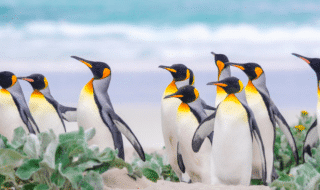isola Falkland in vendita