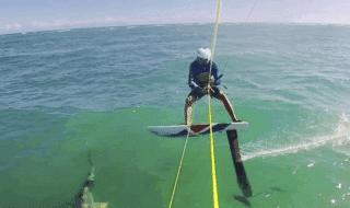 surfista scontro squalo