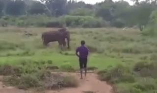 elefante ipnotizzare
