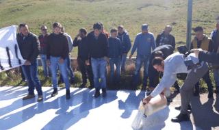 protesta pastori sicilia lettera