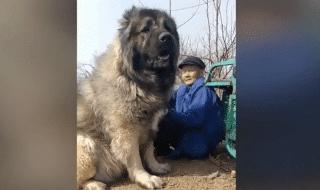 cane più grande mondo