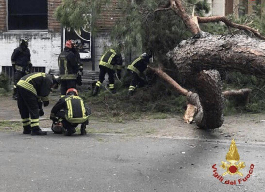 albero caduto roma oggi