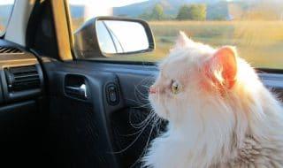 gatto bla bla car
