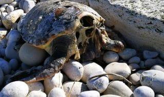 tartarughe marine decapitate bari