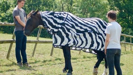 perchè zebre hanno strisce