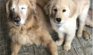 cane cieco cucciolo guida