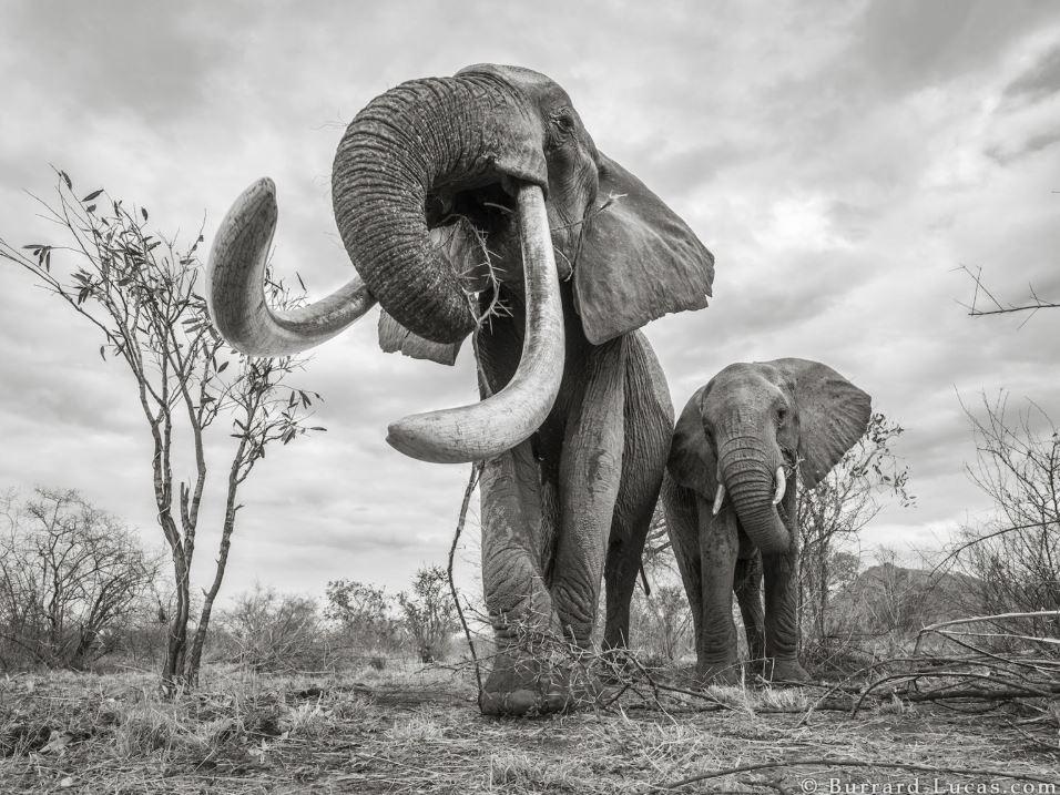 elefantessa regina kenya