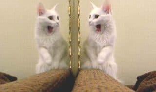 gatti specchio del padrone