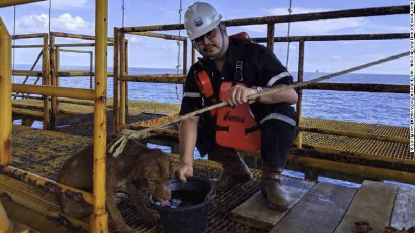 salvataggio cane mare