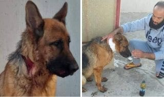 cane ferito tripoli libia