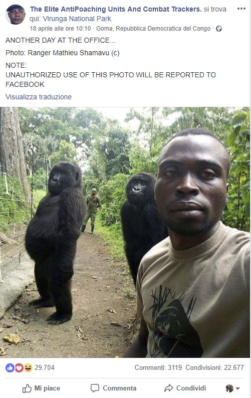 selfie ranger gorilla storia