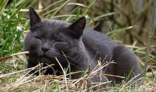 bidello uccide gatto bastonate