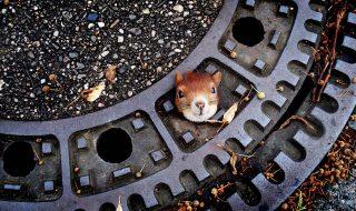 scoiattolo tombino