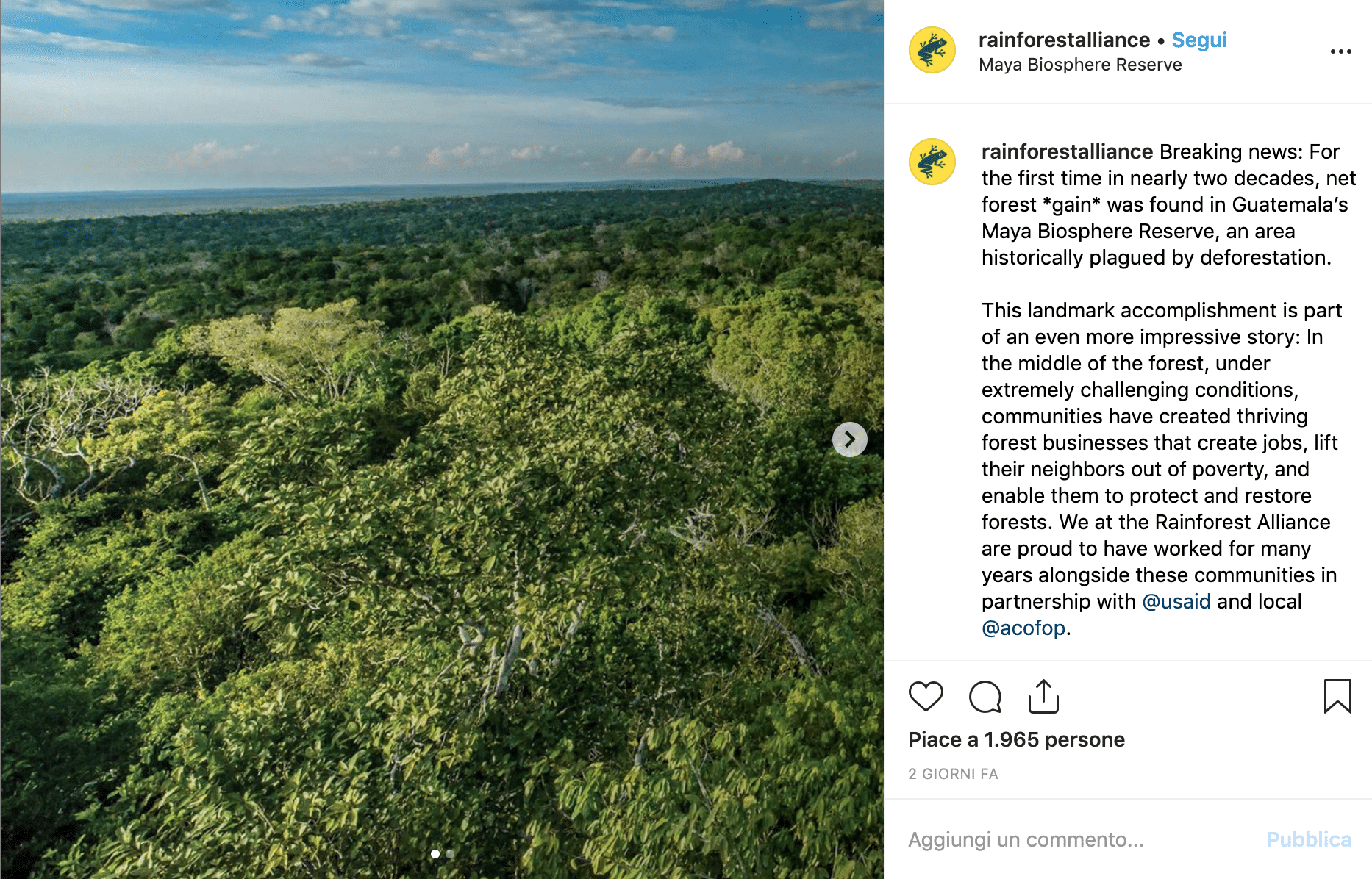 Leonardo Di Caprio foresta Guatemala