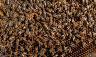 allerta api bologna