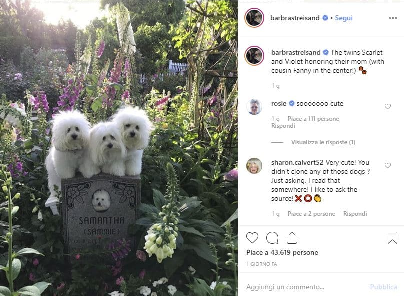 barbara streisand cani clonati