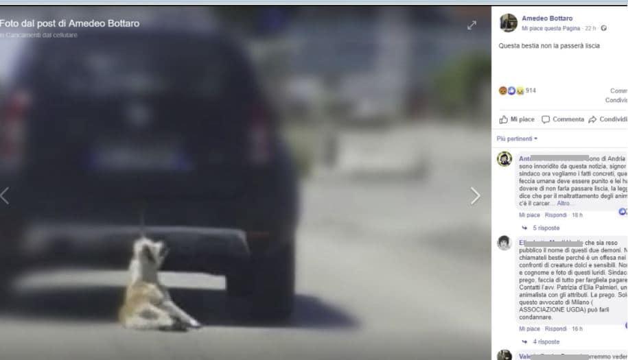 Cane trascinato da auto