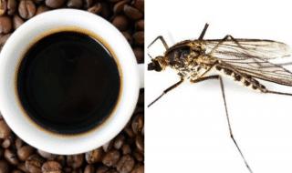 Caffè contro zanzare