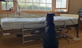 cane aspetta padrone letto ospedale