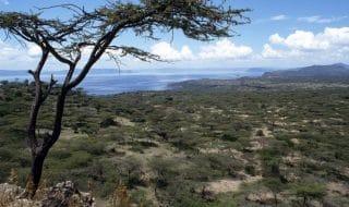 etiopia pianta 4 miliardi alberi