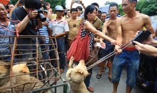 Festival carne di cane Yulin 2019