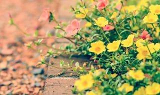 pensionata bari piante