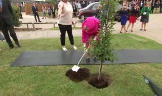 Regina pianta albero