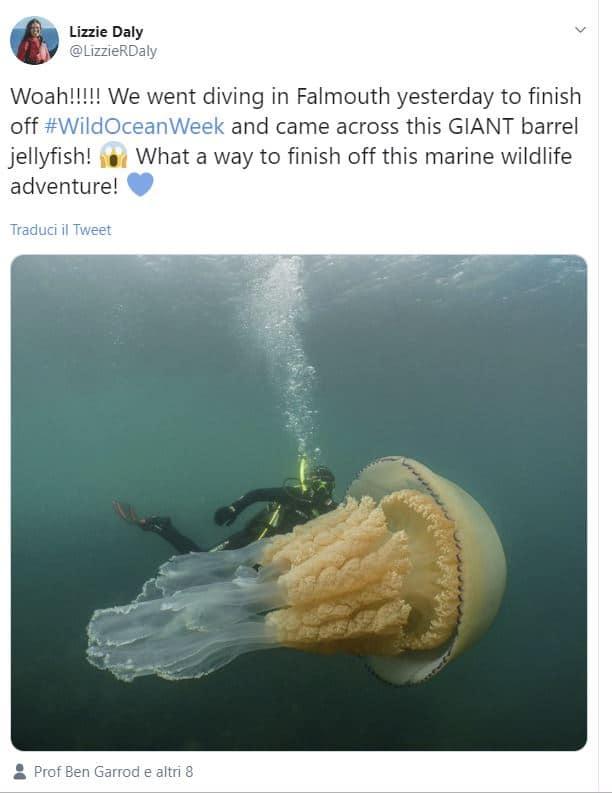 Avvistata una medusa gigante: è grande quanto un uomo