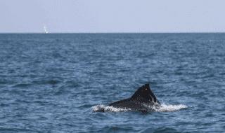 ostia delfino busta