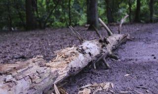 roma cade ramo