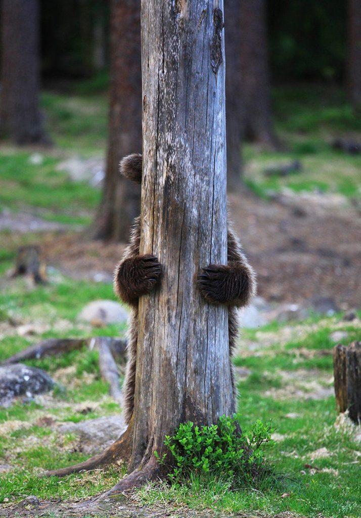 orso timido