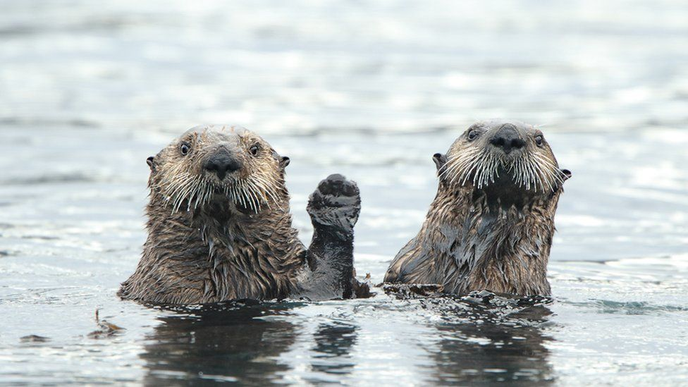 comedy wildlife photography awards otters