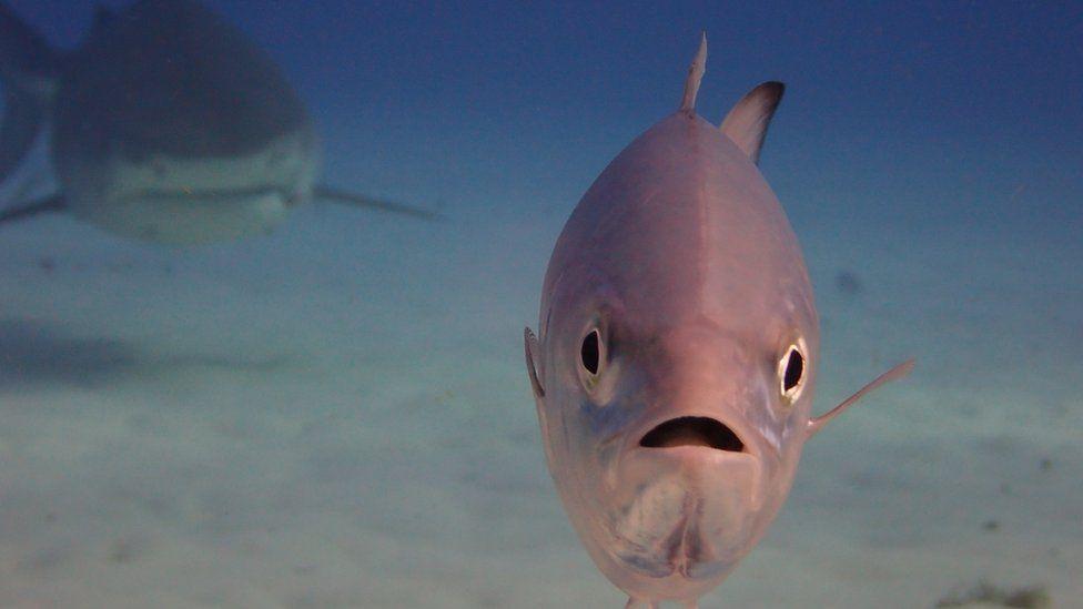 pesce stupito