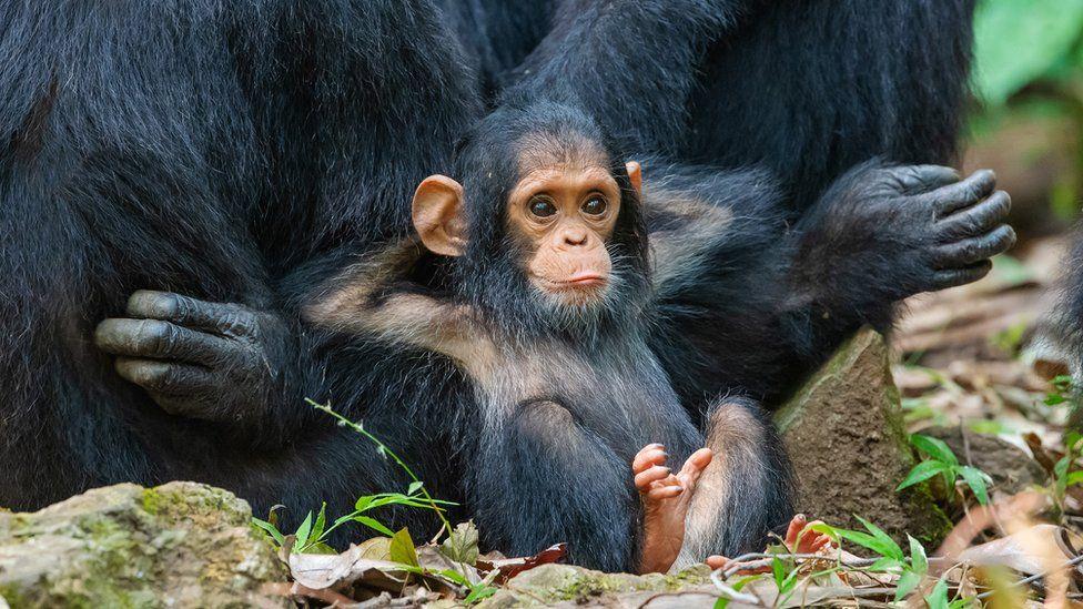 scimmia rilassata
