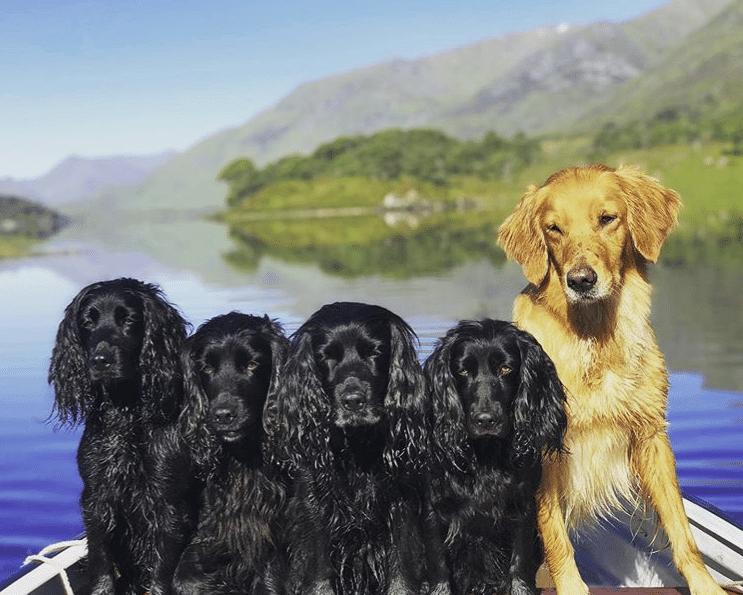 James Middleton cani