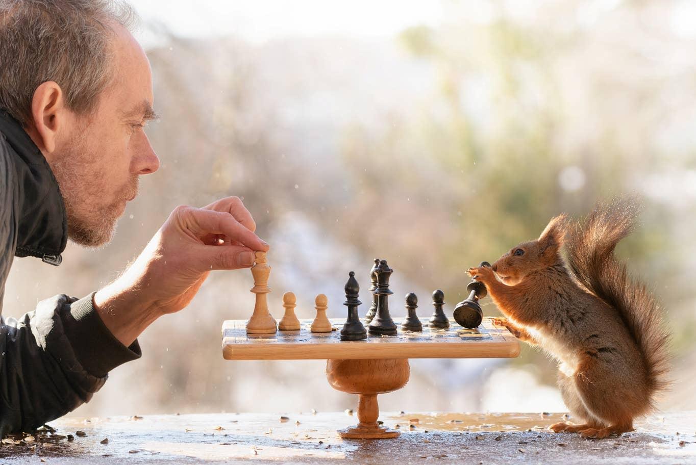 scoiattolo scacchi