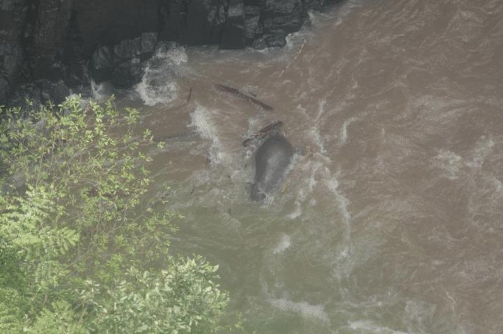 La caduta dei giganti. Sei elefanti morti in una cascata thailandese