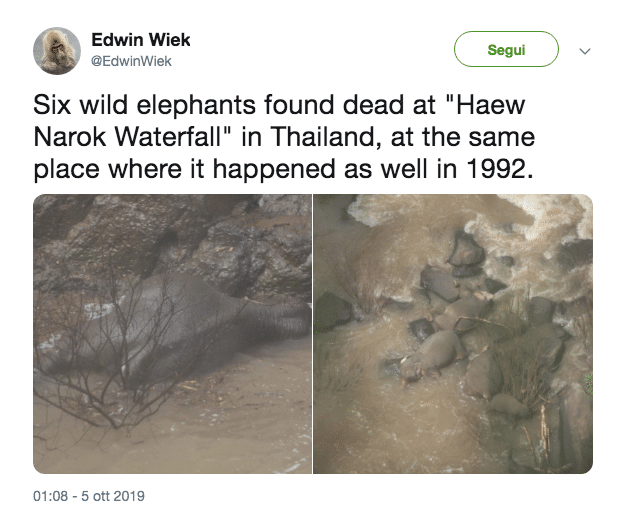 elefanti morti thailandia