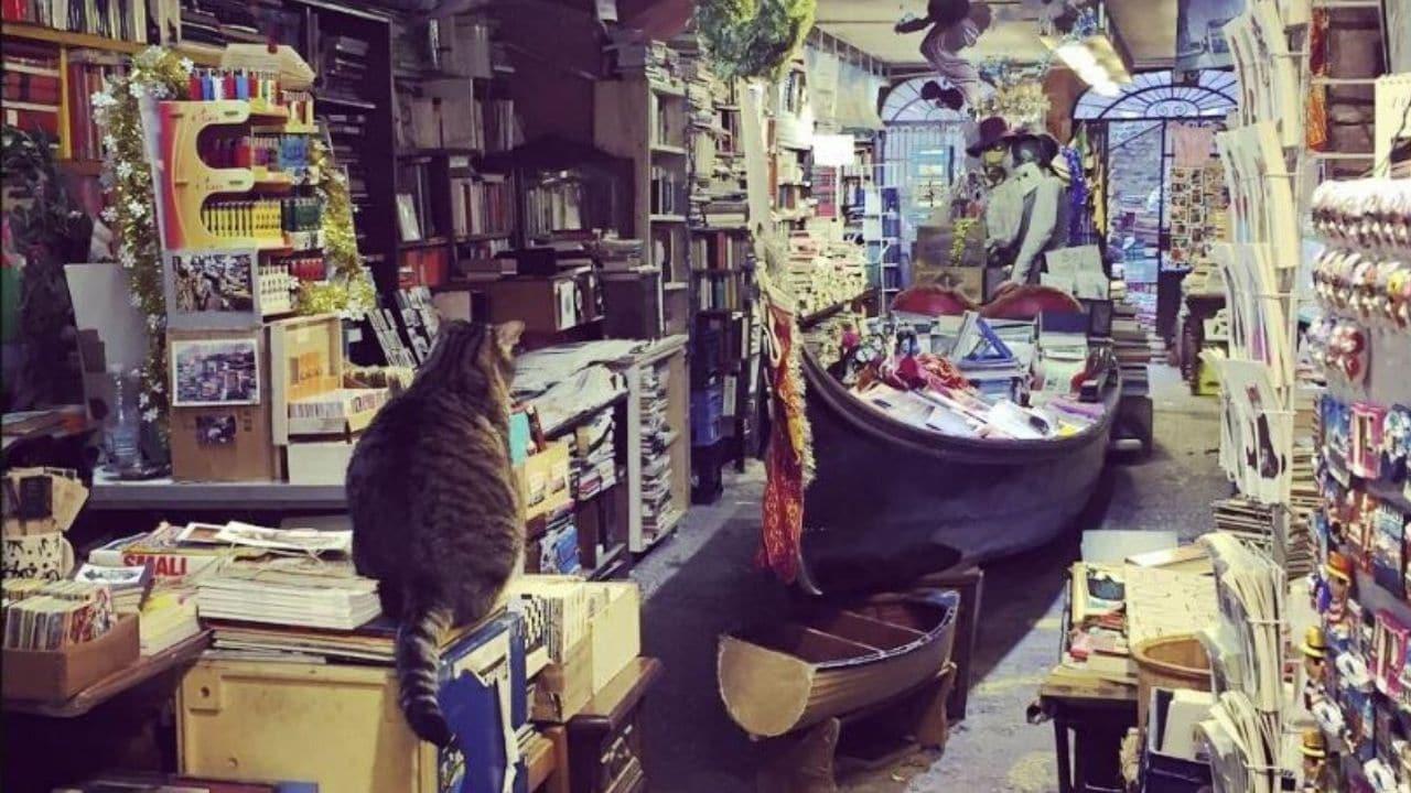 Venezia, la libreria Acqua Alta allagata: