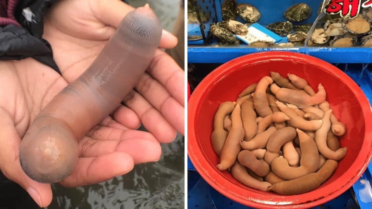 California: migliaia di pesci pene trovati a Drakes Beach
