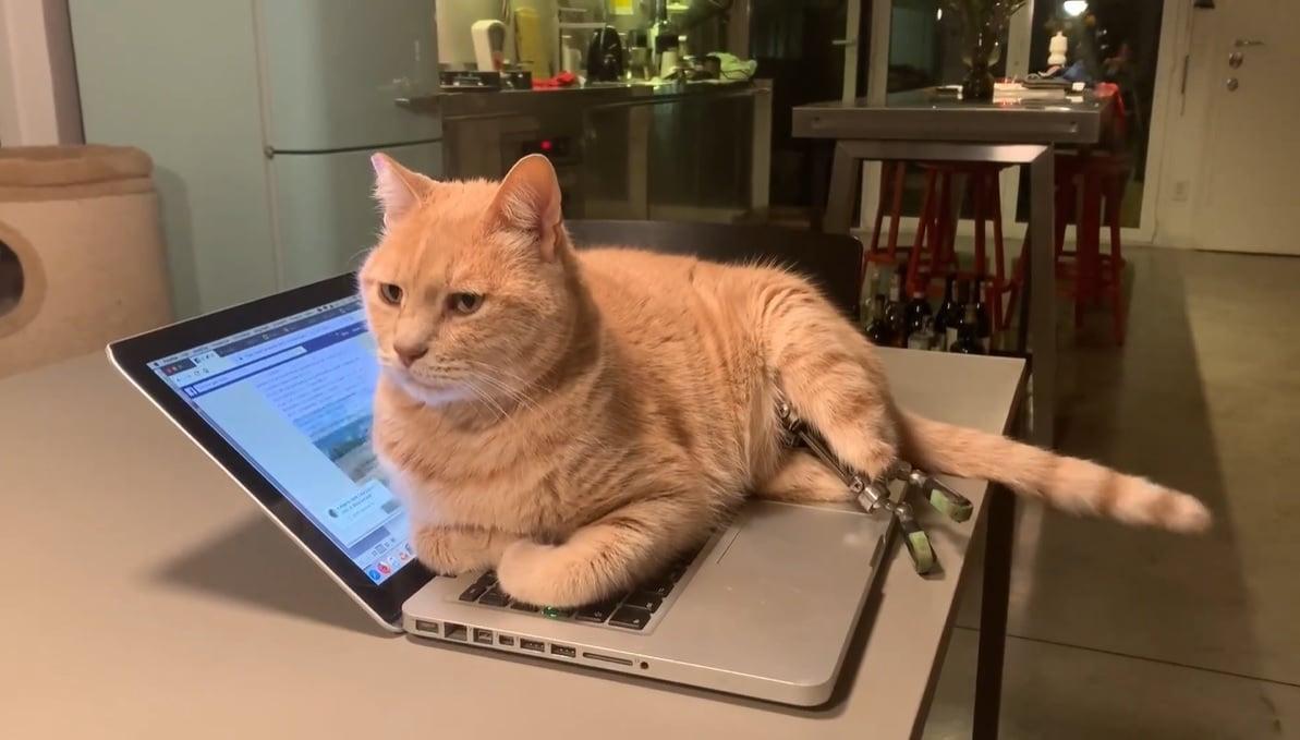 vituzzo gatto bionico