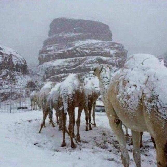 neve deserto