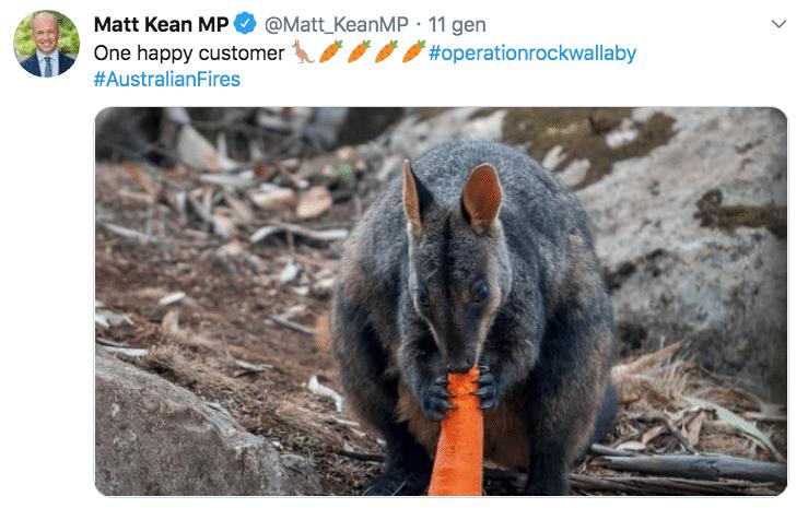 canguri australia incendi
