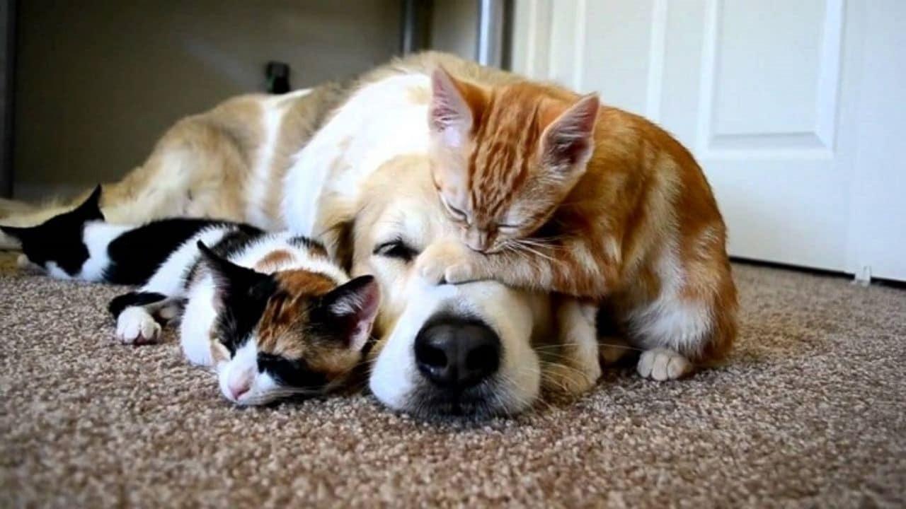 Coronavirus nei cani e nei gatti: i sintomi, come riconoscerlo e la cura