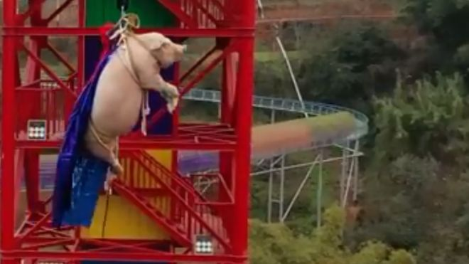 maiale cina bungee