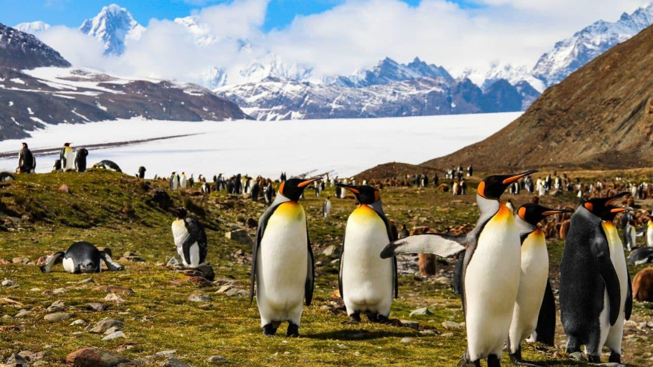 Antartide, nuovo caldo record, superati i 20 gradi: le terri