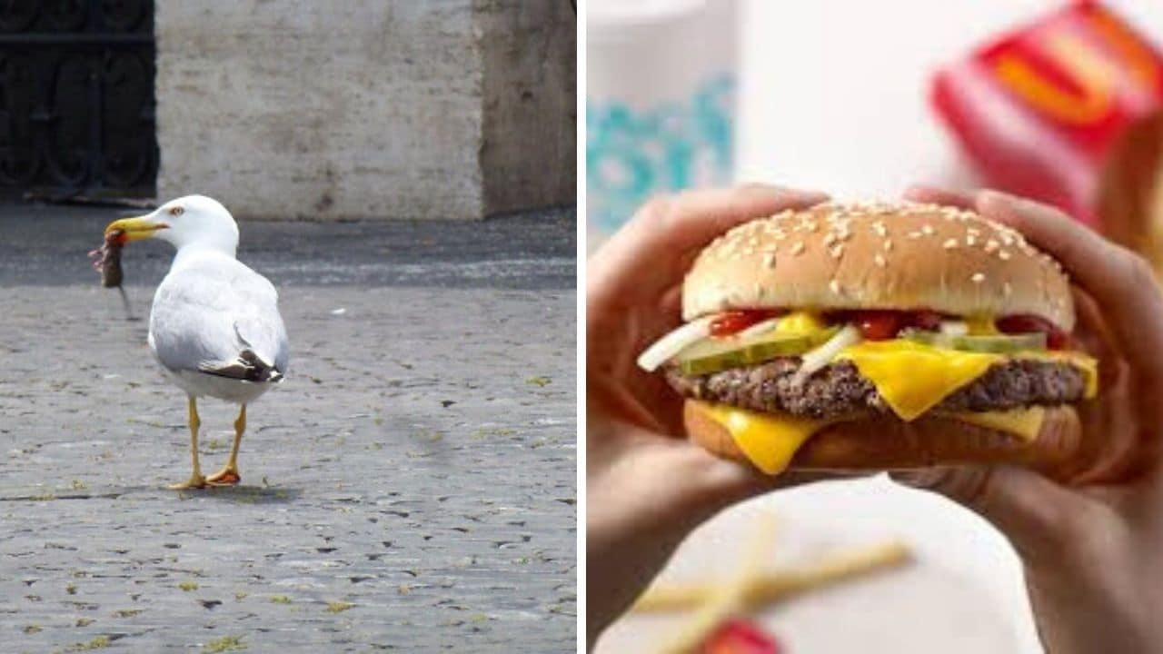 Morde un gabbiano al McDonald's perché tenta di rubargli l'hamburger: 26enne arrestato
